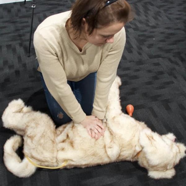 CPR Workshop for Veterinary Nurses