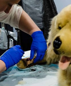 Veterinary Nursing Workshops