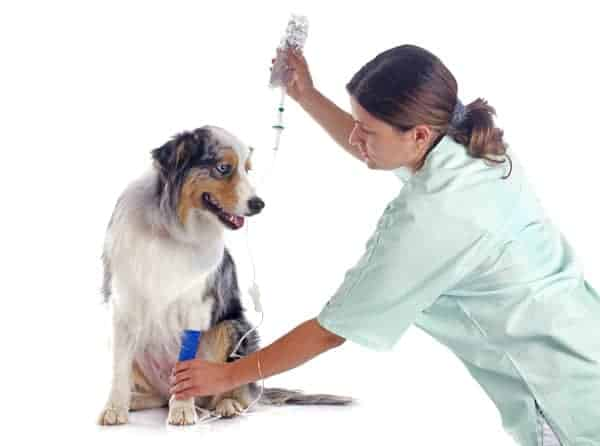 Can I Take A Stray Dog To The Vet