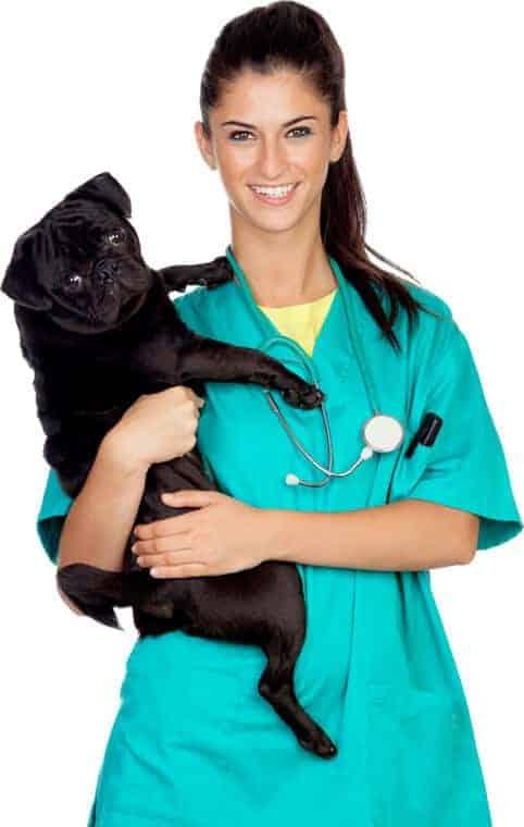 Vet nurse holding black puppy