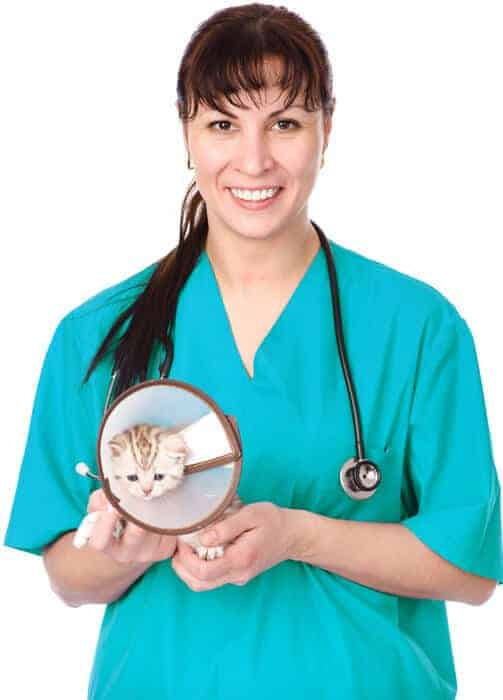 vet nurse holding sick kitten