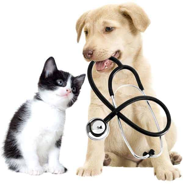 kitten looking at puppy with stethoscope in mouth