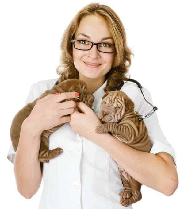 Vet nurse holding two puppies