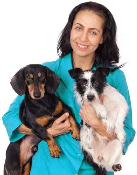 vet nurse holding two small dogs
