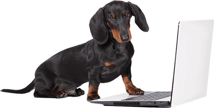 cute dachshund in front of laptop