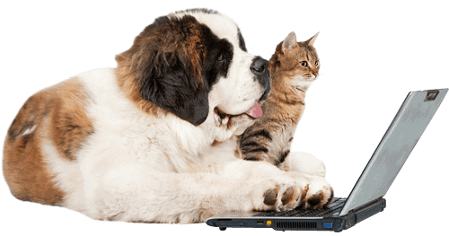 a saint bernard dog and a cat sitting in front of a laptop